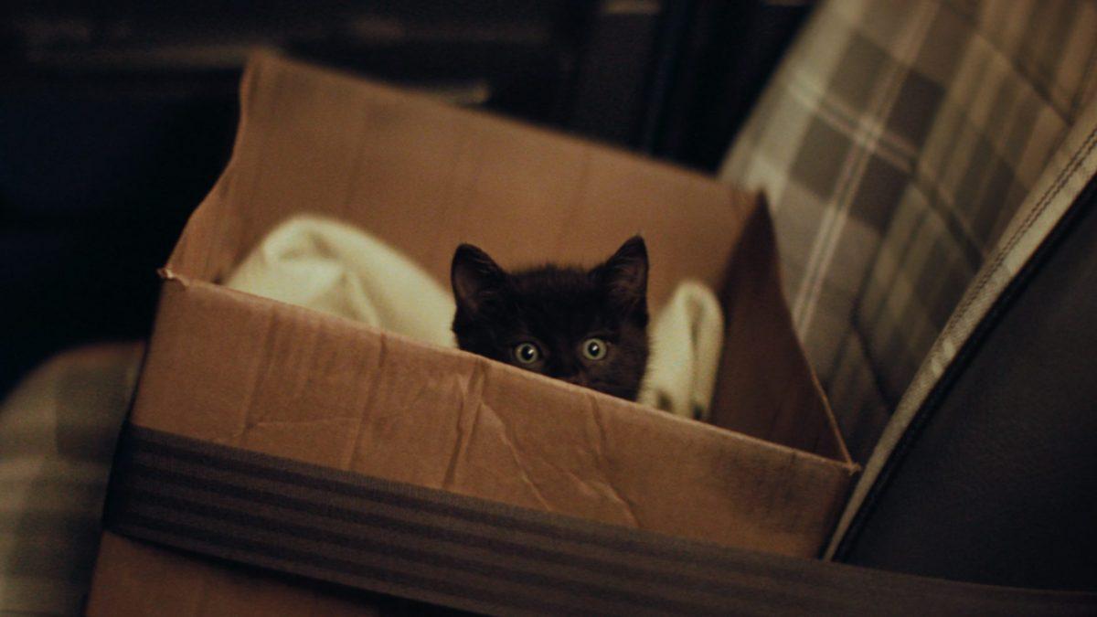 Un gatito negro llamado Frummel, es el inesperado talismán de la buena suerte en el nuevo anuncio de la Lotería Estadal de Holanda